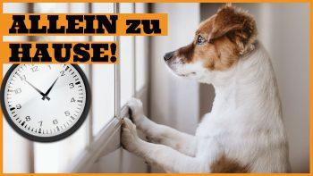 Hund alleine lassen – Wie lange kann der Hund alleine bleiben?