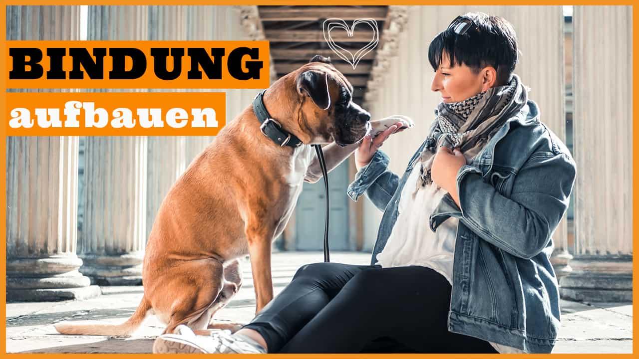 bindung aufbauen zum hund hundetraining dogstv