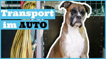 Hund im Auto sicher transportieren / Reisen mit Hund – Transportbox & Co.