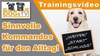Kommandos für den Hund l 4 hilfreiche Kommandos für den Alltag