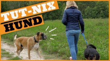 Der Tut-nix-Hund l Unerwünschte Hundebegegnungen meistern!