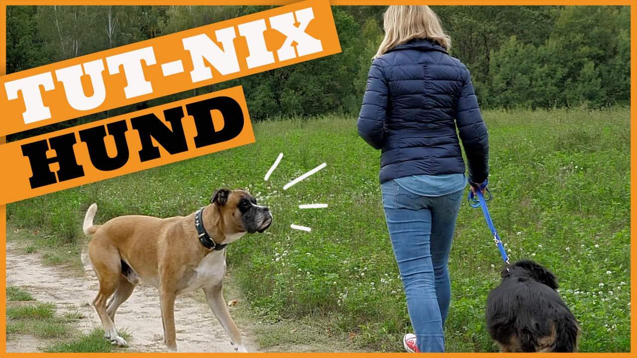 hund tut nichts der tut-nix-hund dogstv