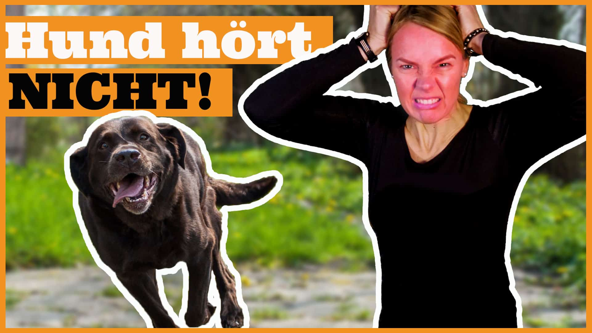 hund hört nicht dogstv