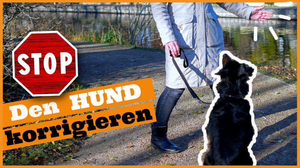 hund korrigieren unerwünschtes verhalten hund dogstv