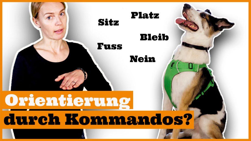 hund erziehen ohne hundekommandos dogstv