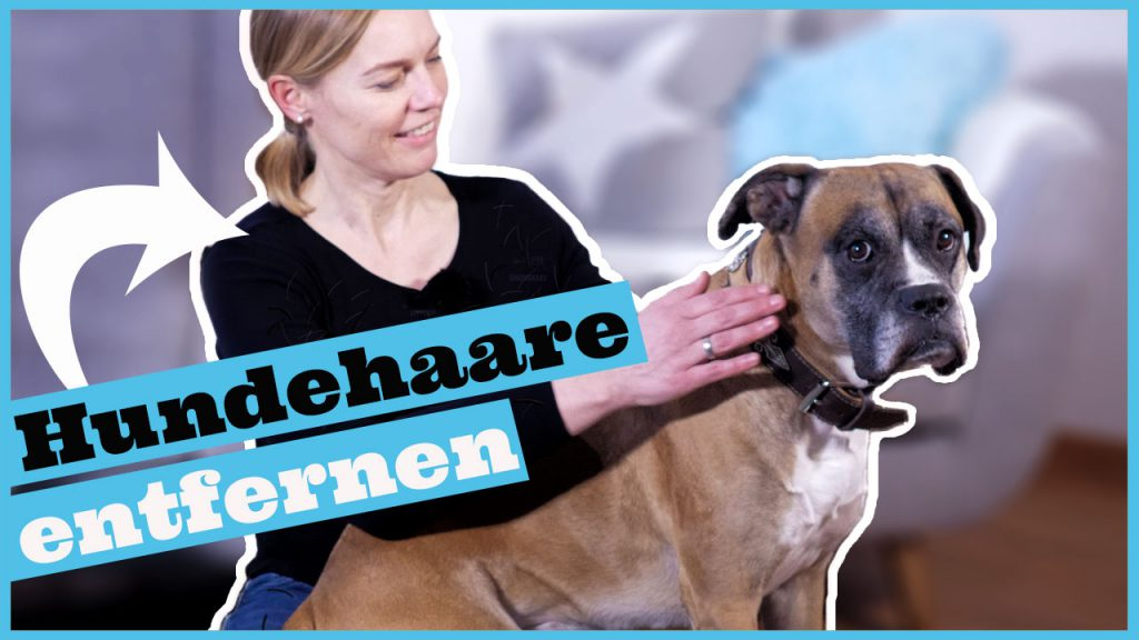 hundehaare entfernen dogstv