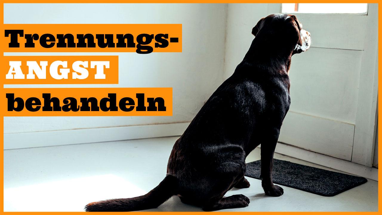 Trennungsangst hund behandeln dogstv