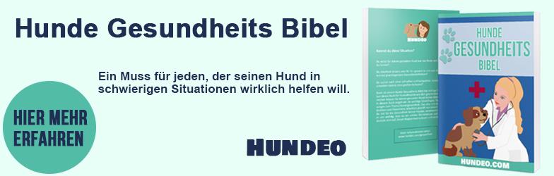 hundegesundheitsbibel