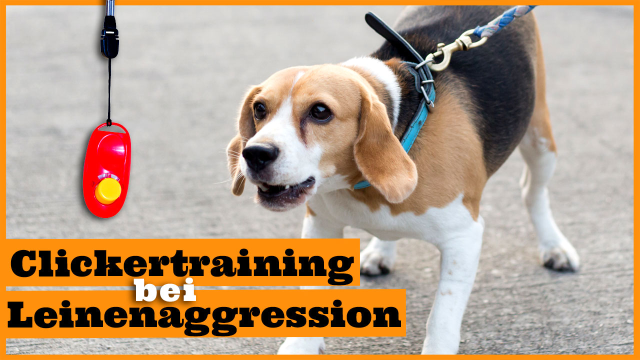 clickertraining leinenaggression dogstv