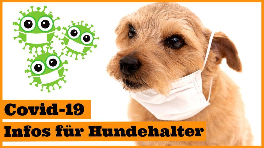 coronavirus hund pandemie ausgangssperre covid-10 dogstv