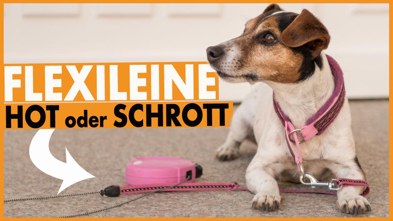 flexileine für hund dogstv