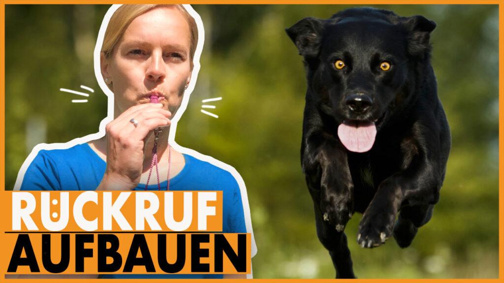hund rueckruf training dogstv