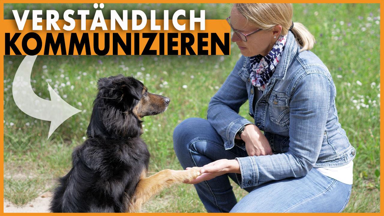 kommunikation hund dogstv