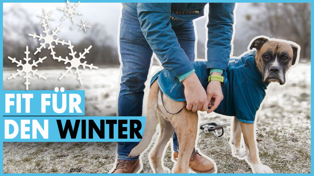 hund im winter dogstv