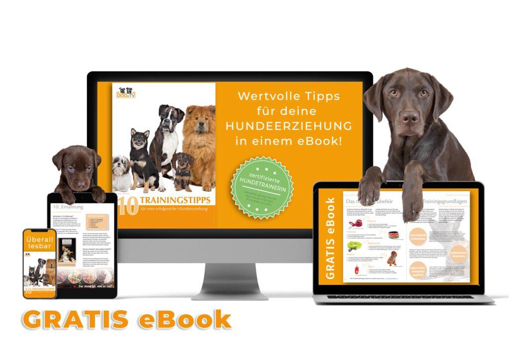 hundeerziehung ebook dogstv