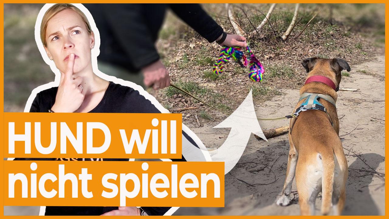 hund spielt nicht zergel
