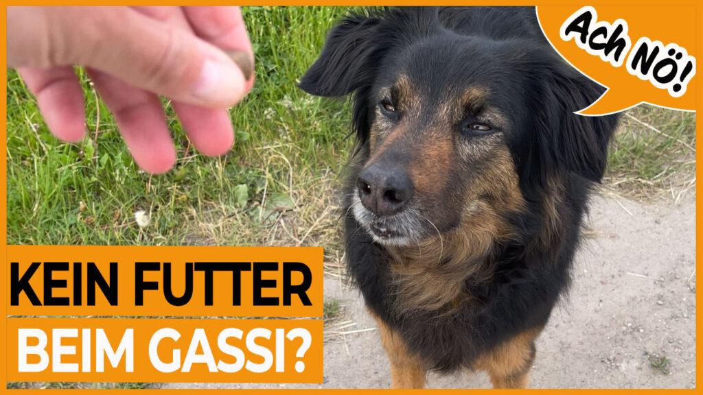 hund reagiert nicht auf leckerlis dogstv